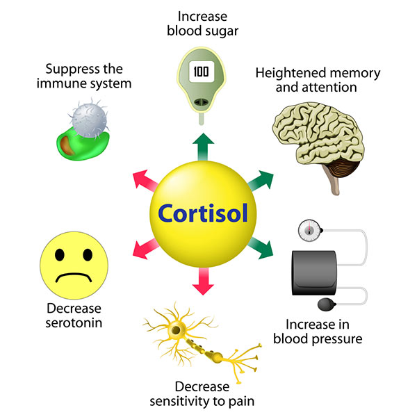 Cortisol levels can be effected by overtraining
