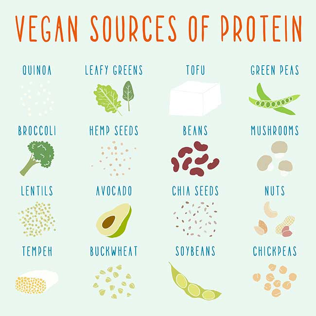 sources of vegan protein