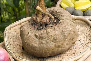 konjac root - glucomannan appetite suppressant
